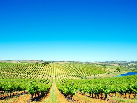 Portugual: Alentejo aumentará su producción de vino entre un 5 y un 10%
