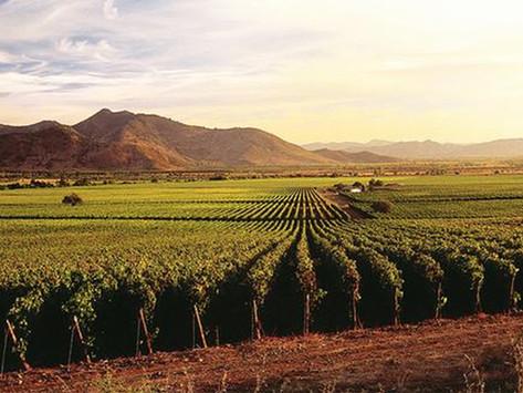 Chile: Aumentan las exportaciones de vino en un 5% en 2021