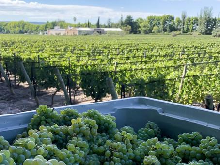 """Dartley Family Wines: """"La determinación en la zonificación"""" como foco de su Vendimia 2021"""