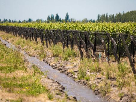 Bodegas Bianchi aprobó el Protocolo de Sustentabilidad de Bodegas de Argentina