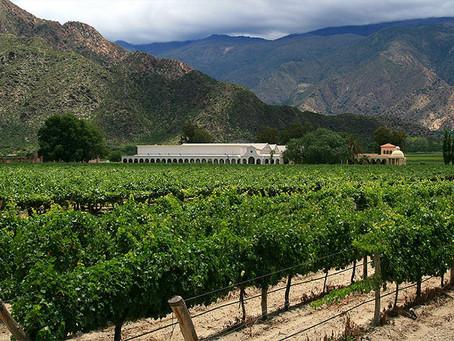 Argentina: Se mantuvieron las hectáreas cultivadas en 2020, pero con más fincas