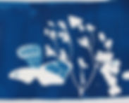 cyanotype smaller.jpg