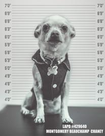 LAPD DOG