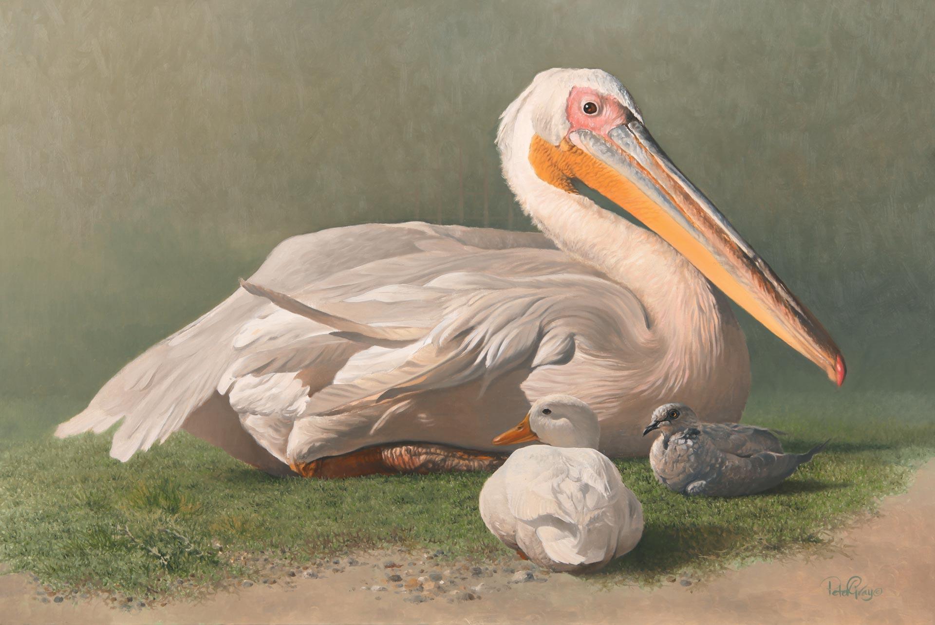 Pelican-Dove.jpg