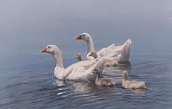 Swimming-Lesson.jpg