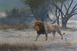 Desert-Lion.jpg
