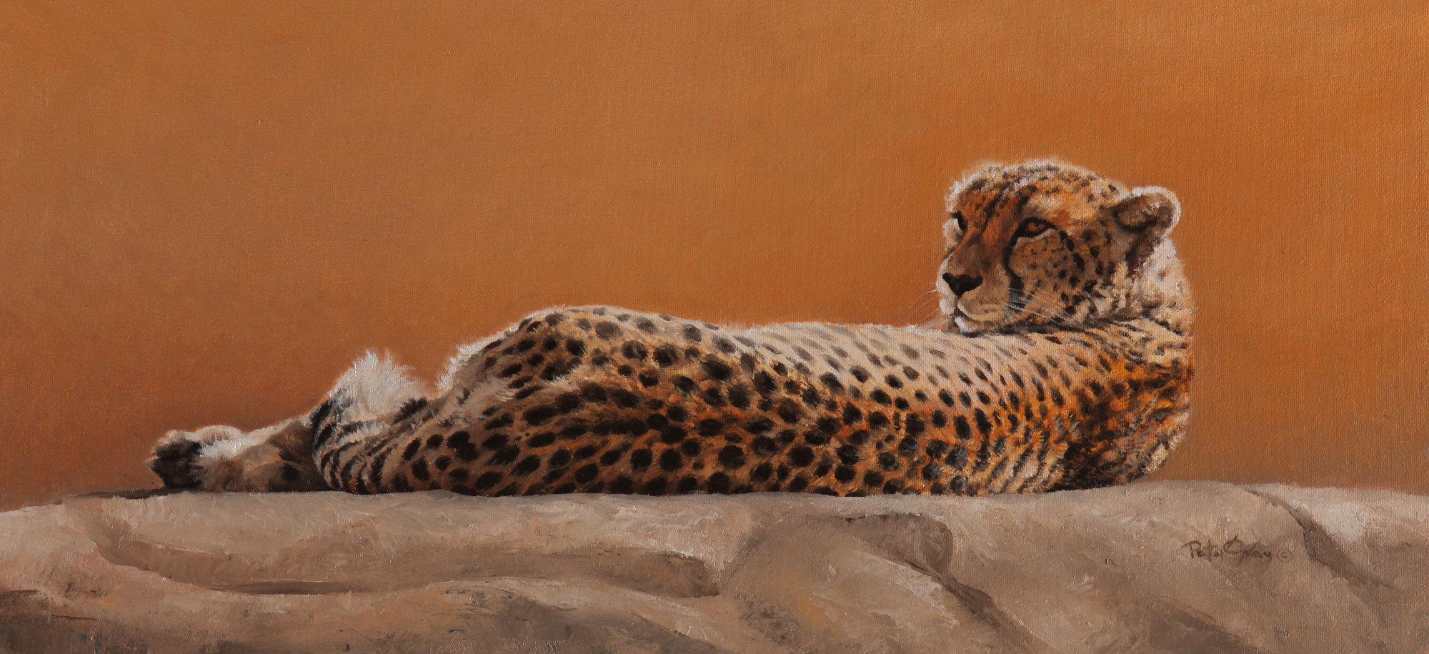 Basking-Cheetah.jpg