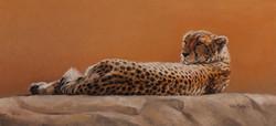 Basking-Cheetah.jpg