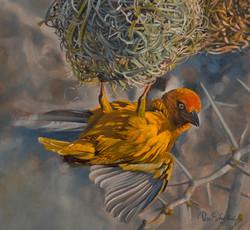 Best-Nest.jpg