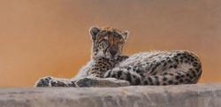 Basking-Cheetah_02.jpg