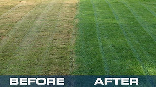 lawn-fertilization-service-before-after.