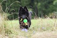 trick dog.jpg