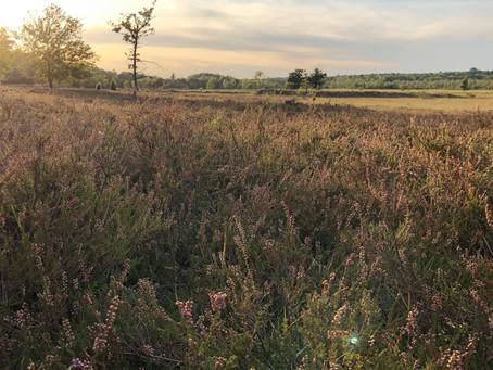 COACHING WALK – DER HORIZONT ALS LEHRER
