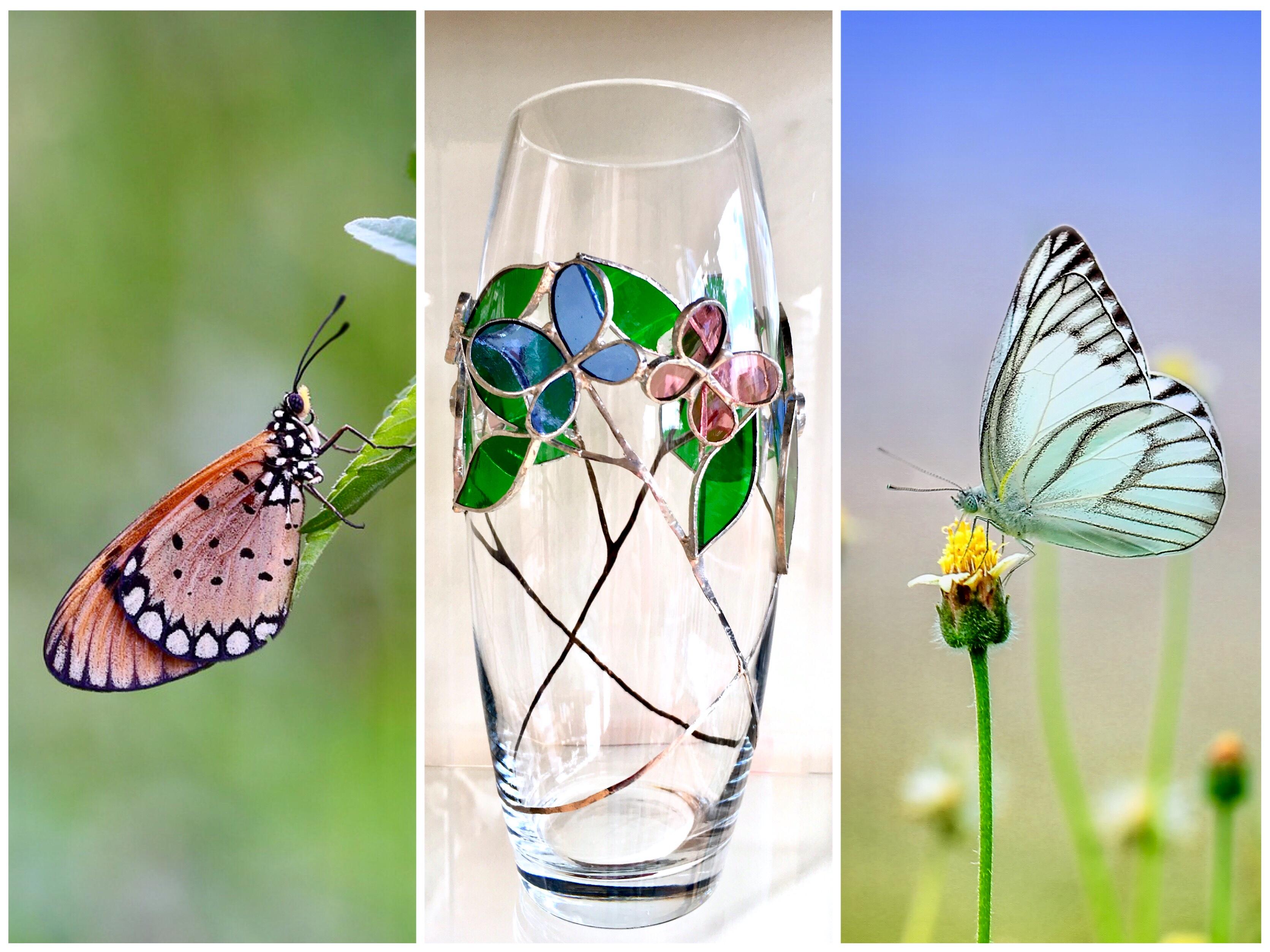 The dance of butterflies