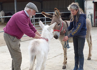 donkey-sanctuary1.jpg