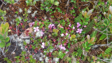 Elfin forest flowers