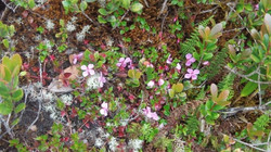 Elfin forest flowers