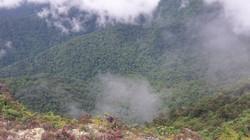 Rain forest in the Sierra de Agalta