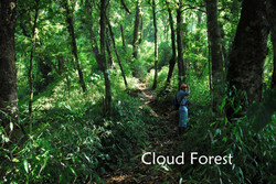 High cloud forest