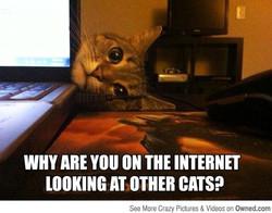 Funny-Cat-Meme-Work-7