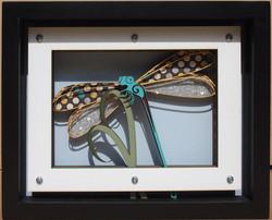 Dragonfly  $130