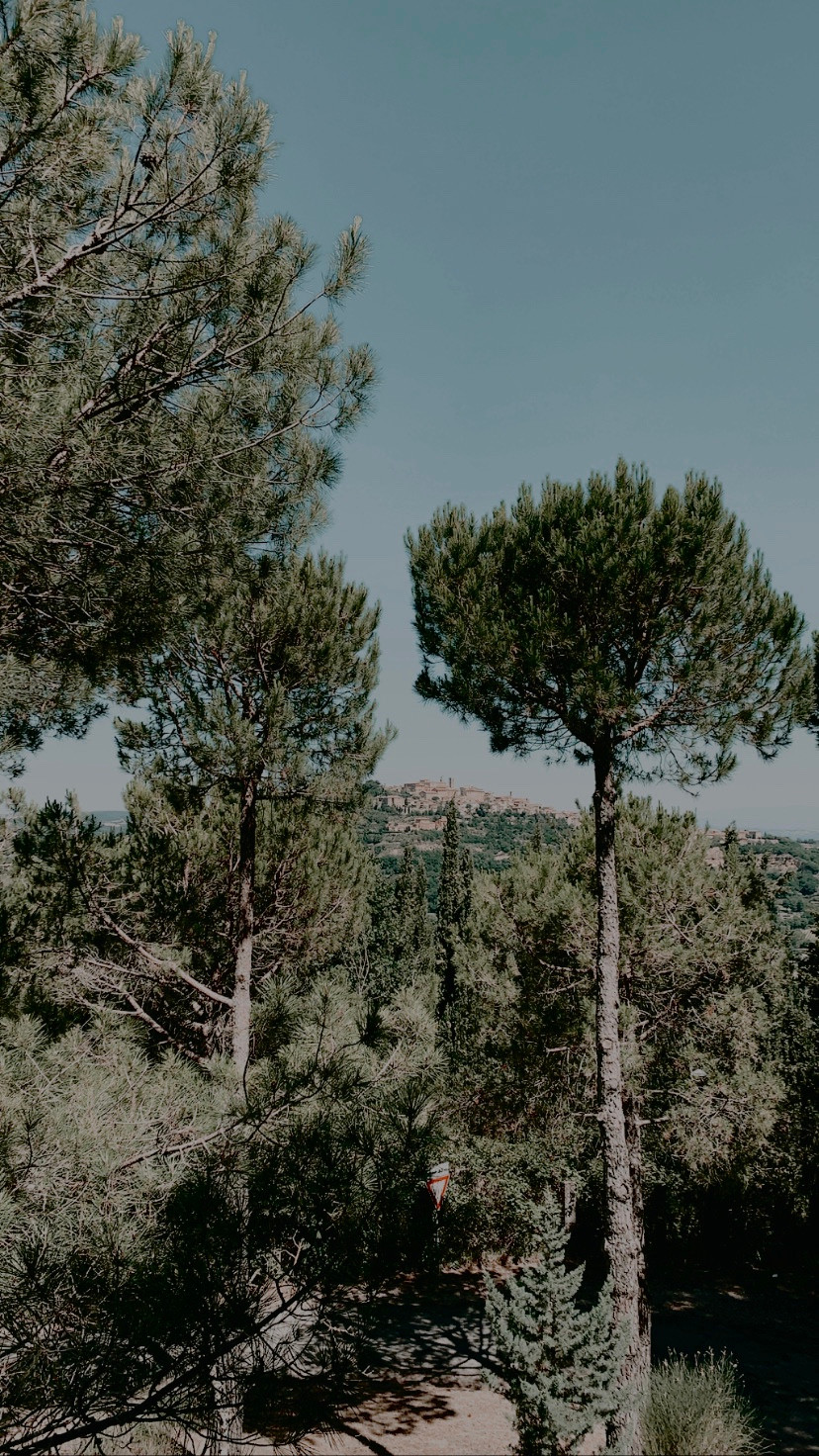 Montepulciano Area