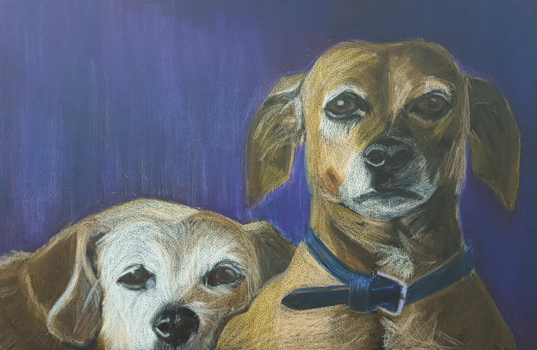 Alf and Nell border terriers