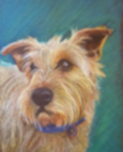 Biggles, Border Terrier A3 oil and wax p