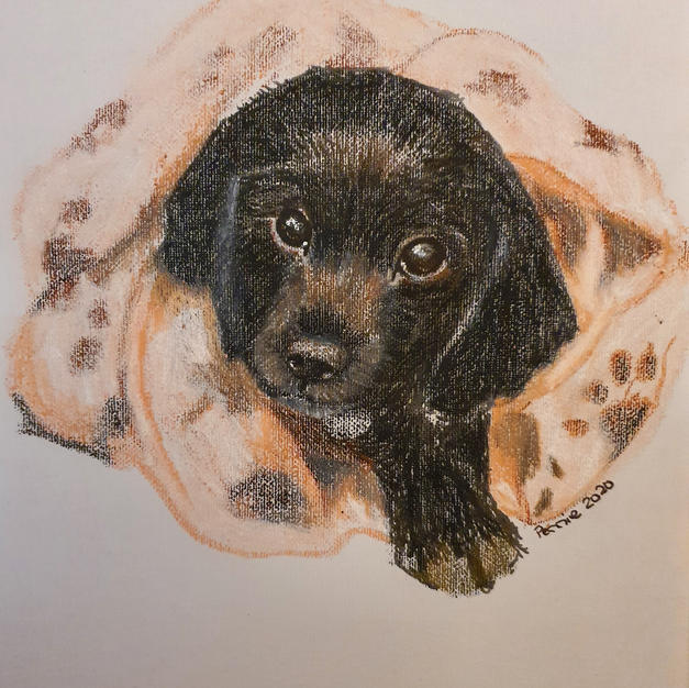 Black Cocker spaniel pup
