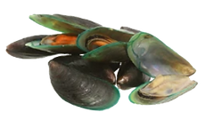 green-lipped mussel powder.png