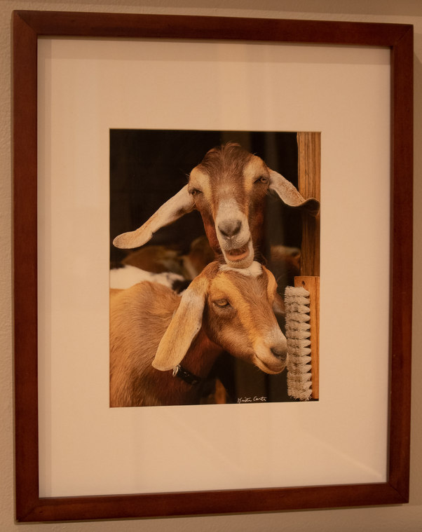 """""""Two goats Walk into a Barn"""" by Kristine Carter"""