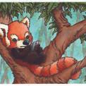 Panda Roux au téléphone