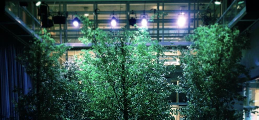 NYX loves trees in a spotlight