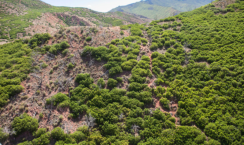 south-canyon-trail-web4.jpg