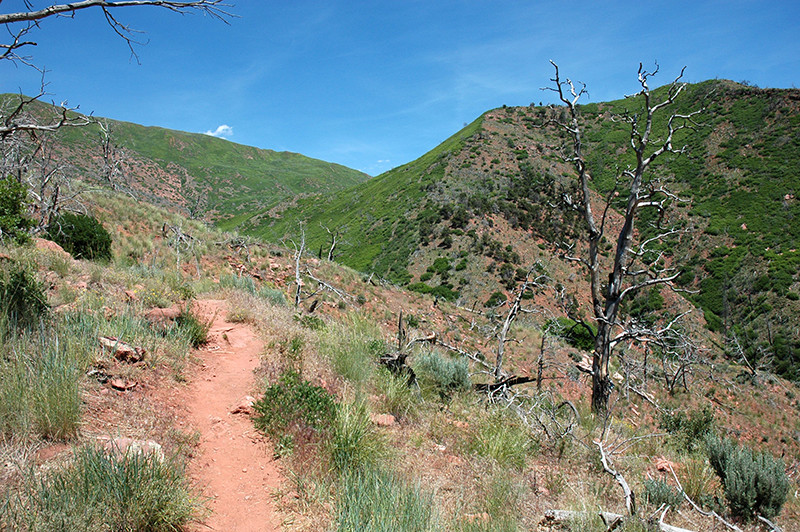 south-canyon-trail-web.jpg