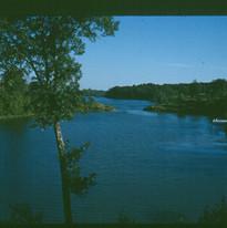 lake_w_tree.jpg