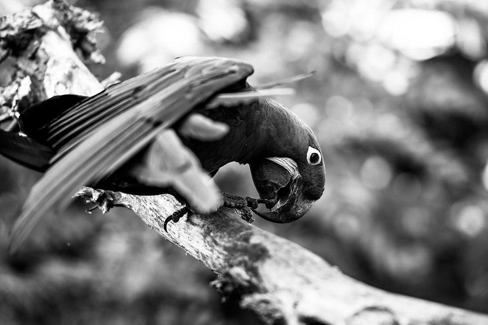 20201012 Parc des oiseaux-28.jpg