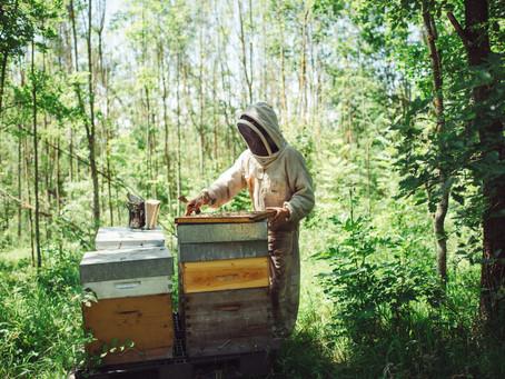 L'apiculture en France