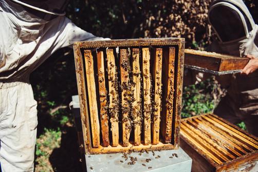 20200509 Les abeilles de Nicolas-21.jpg