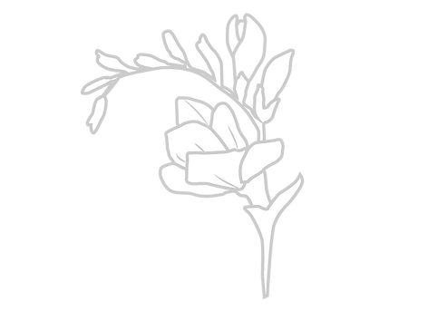 Freesia-01.png
