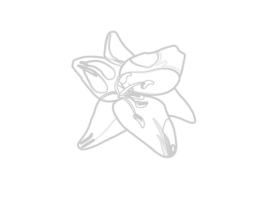 Lily-01.png