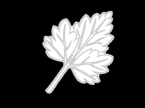 Patchouli-01.png