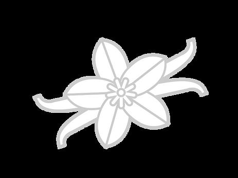 Vanilla Bean-01.png
