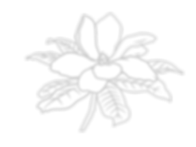 magnolia-01.png