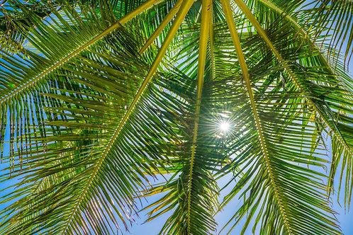 Palm Tree, Queensland