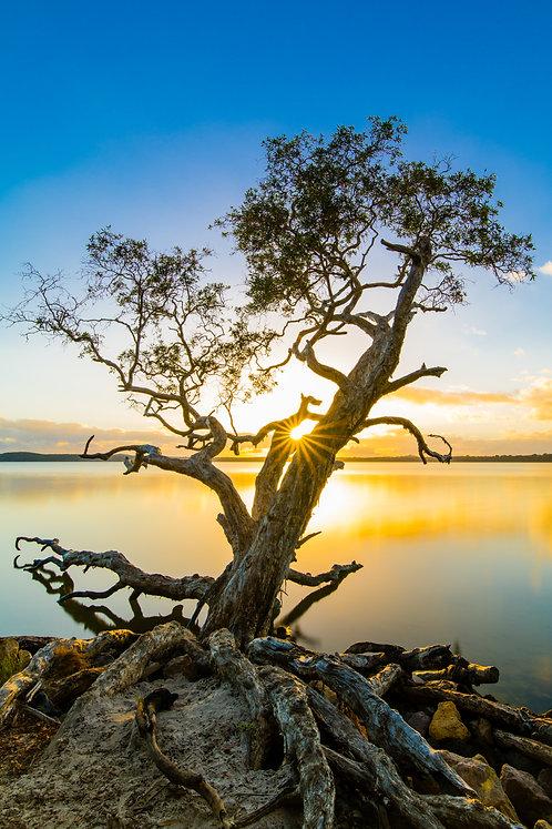 Lake Weyba Sunrise, Queensland