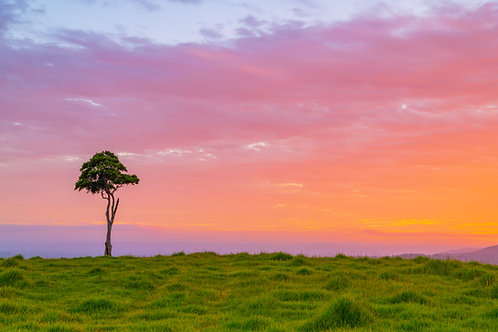 One Tree Hill Sunset, Maleny QLD