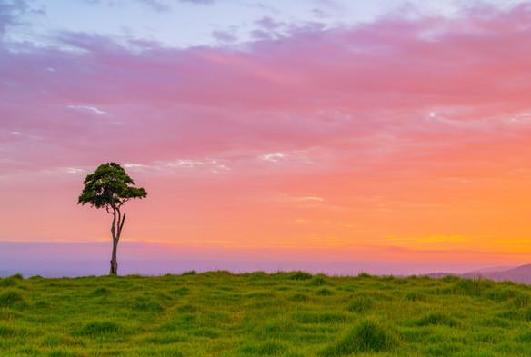 One Tree Hill. Maleny