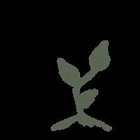 Planta verde con tres hojas para representar las tres rutas de Diálogos en el Bosque