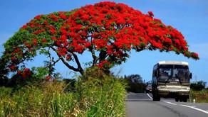 Árboles nativos de Yucatán